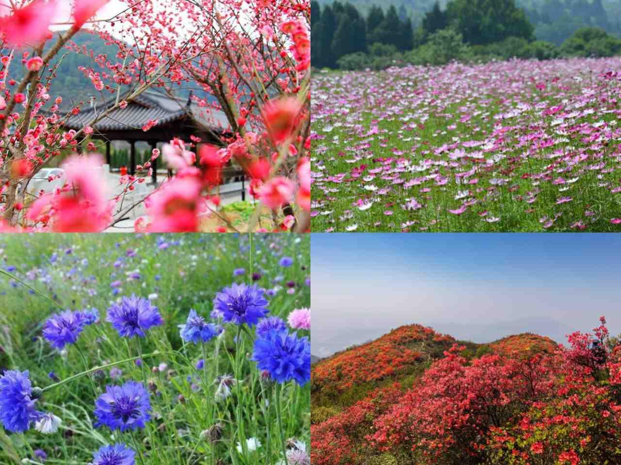 杭州市内包车网_杭州旅游建德的春天